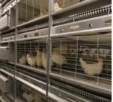 ИЛКОНСУЛТ - Продукти - оборудване за клетъчно птицевъдство